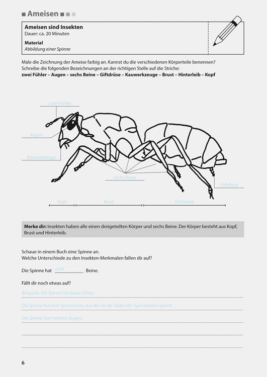 Arbeitsblatt Bienen Grundschule : Besten ameisen insekten bilder auf pinterest