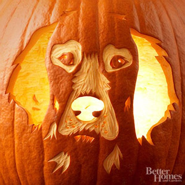 Pumpkin carvings dog breeds and cool carving on