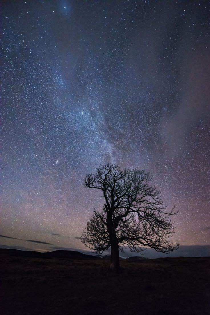 Cairngorms Night Sky Photography - Milky Way over lone tree in the #Cairngorms #Scotland