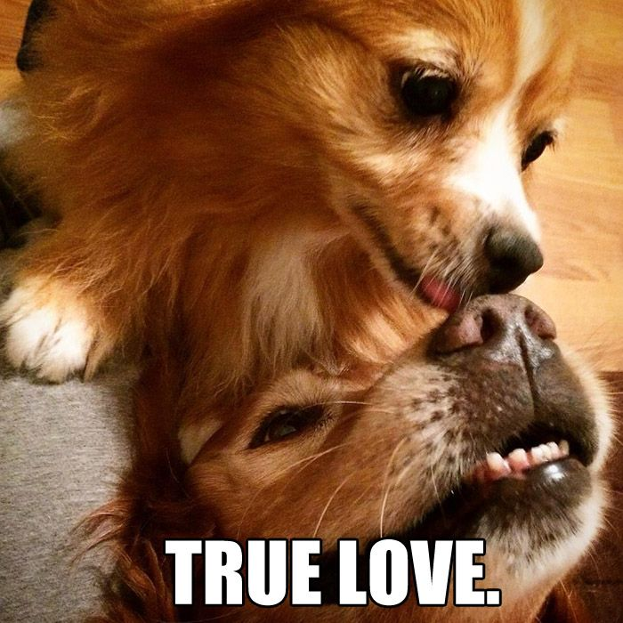 There is nothing stronger than a dog friendship!