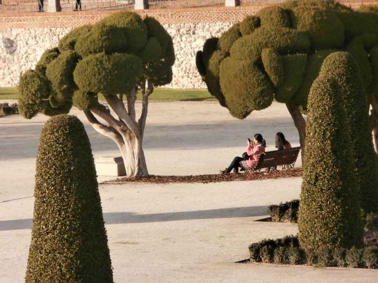 Cipreses moldeados - Parterre del Parque del Retiro