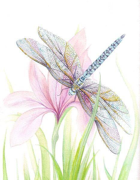 Barbara Anna Cichocka, watercolor