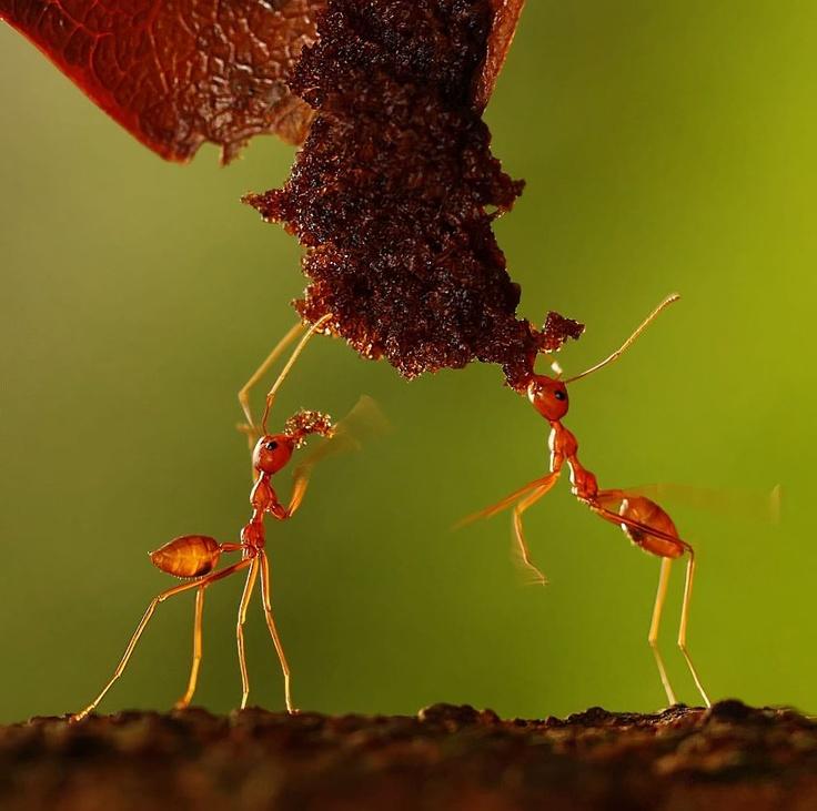 ANTS - Sony world photography award