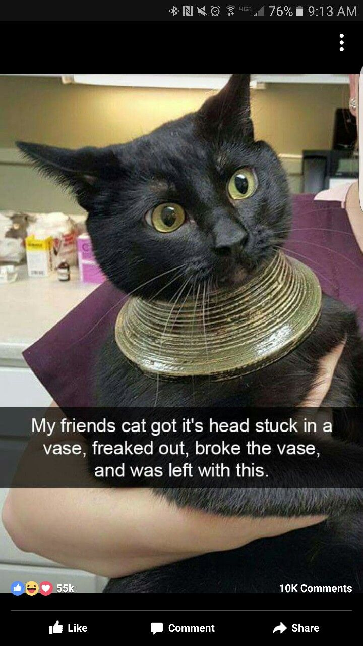 Pin by Alleissa Holder on call center humor Funny cats