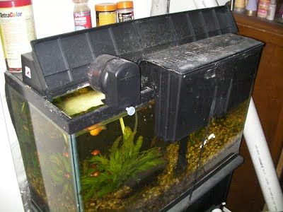 Aquariponics indoor aquarium aquaponics homemade for Hydroponic aquarium with fish