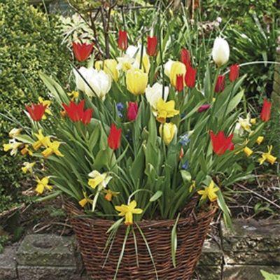 Wie houdt er nu niet van bloemen! Jaarlijks trekt de Keukenhof, een bekend bloemenpark ten noordwesten van Lisse, in het voorjaar ongeveer 800.000 bezoekers vanuit de hele wereld. Ook daarbuiten kan men met de auto of fiets genieten van de bollenvelden of kijken naar de jaarlijkse bloemencorso.