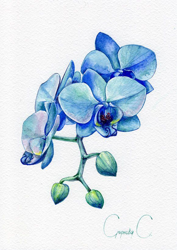 Orchid Flowers Blue Green Watercolor Original Painting From