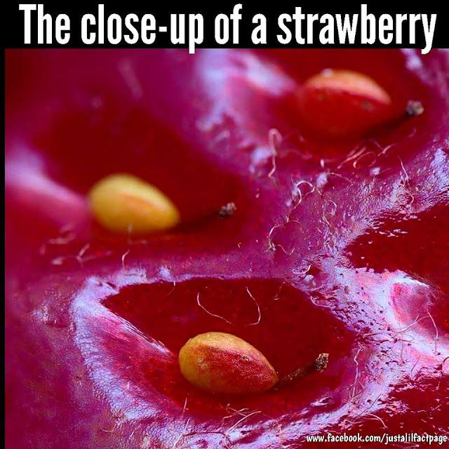 Just a lil fact!: What a strawberry fact!