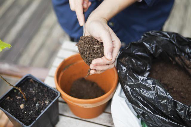 Simple potting soil mix recipes