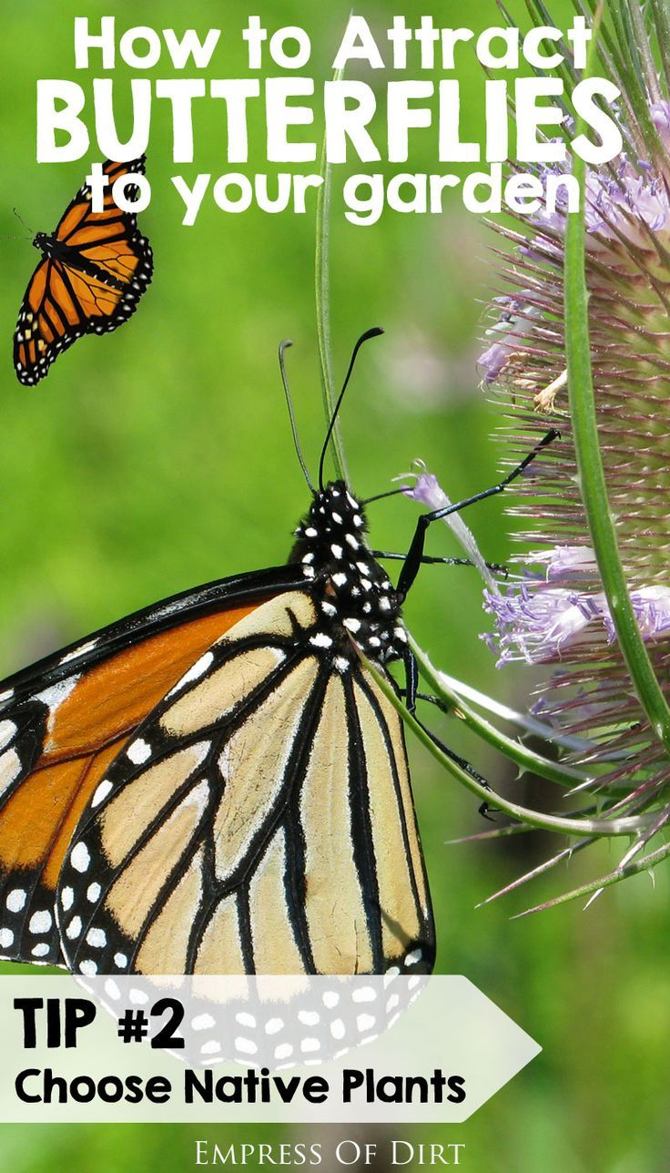 Tip #2: Choose native plants. See more tips for attracting butterflies to your garden.....#spon