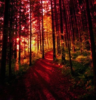 /: Forests, Favorite Places, Nature, Autumn, Beautiful, Trees, Crimson Forest