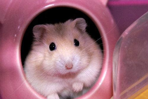5 Best Pets For Kids Before Getting A Dog Or Cat ... see more at PetsLady.com ... The FUN site for Animal Lovers