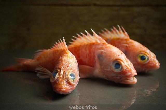Cabrachos by webos fritos, via Flickr
