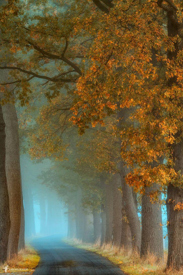Autumn alley (Netherlands) by Lars van de Goor