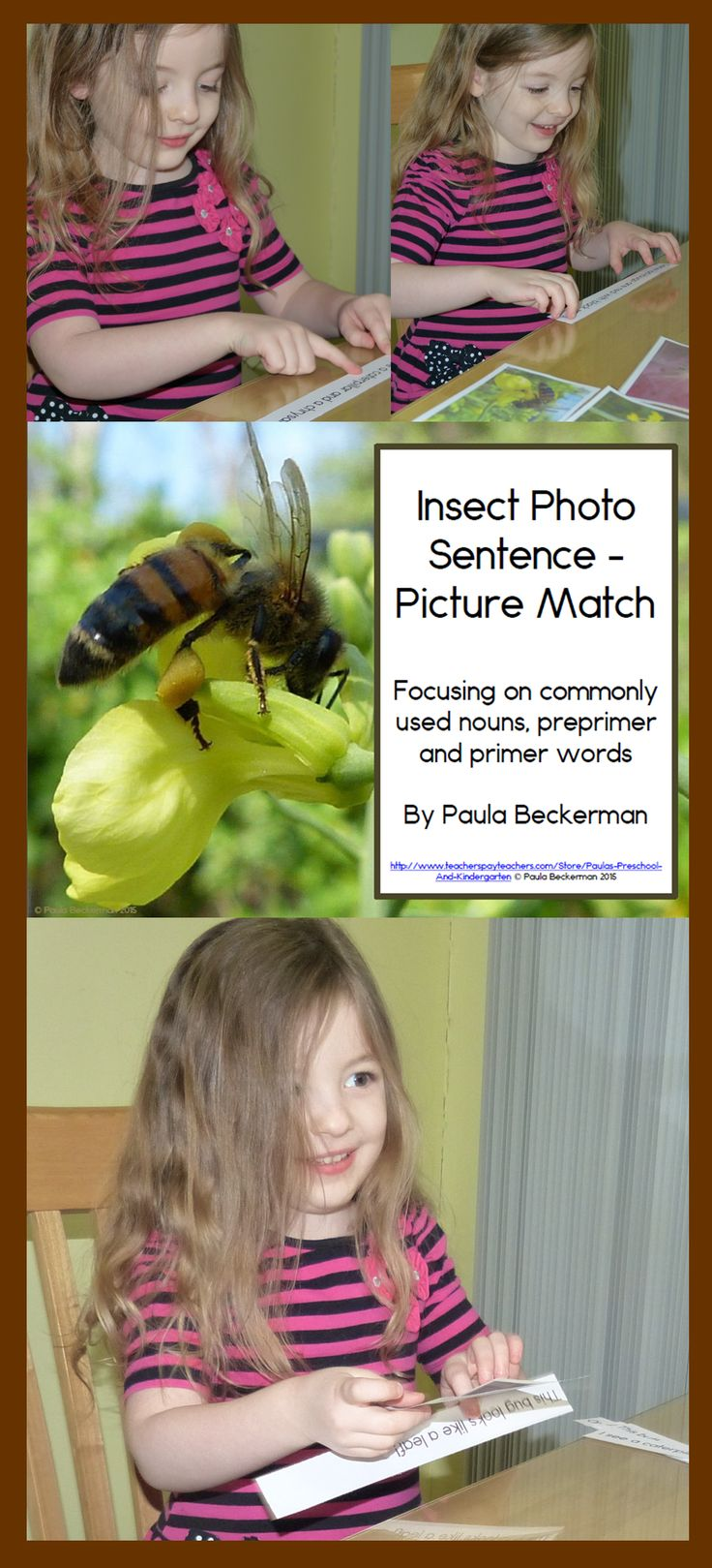 A complete literacy and/or science center, Insect Photo Sentence Picture Match comes with 12 close up photographs of common insects, and sentences to match. With a focus on commonly used nouns, preprimer and primer words, these simple factual sentences will teach your students about insects including butterfly, dragonfly, katydid, ladybug, praying mantis, wasp, beetles, ants and bumblebees.