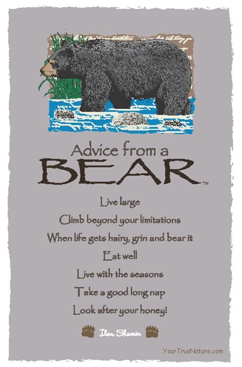 Spirit Totem Animals:  #Advice from a #Bear.
