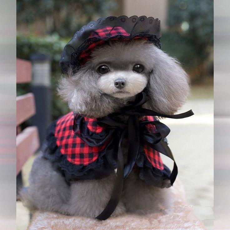 Best 25 Summer Dog Ideas On Pinterest Diy Crochet Dog