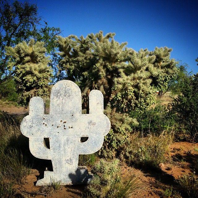 Rare Cactus spotted in #Arizona