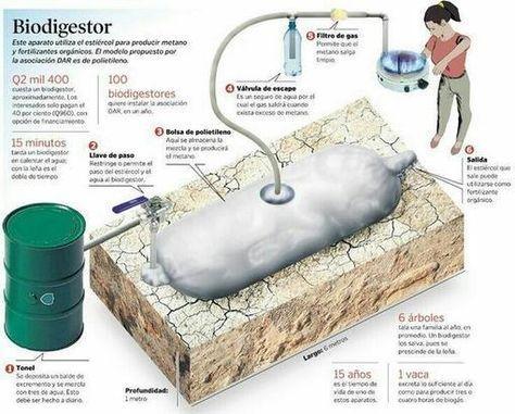 Como funciona un biodigestor