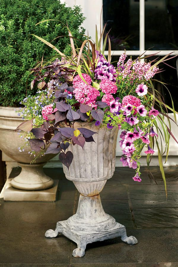 Sit back and imagine this classic lead urn in a dreamy garden or on a light-filled screened porch. The key to designing this look is combining contrasting textures—grassy cordyline, puffy pink dianthus, sweeping 'Ace of Spades' sweet potato vine, dainty blue lobelia, and spires of pink angelonia.