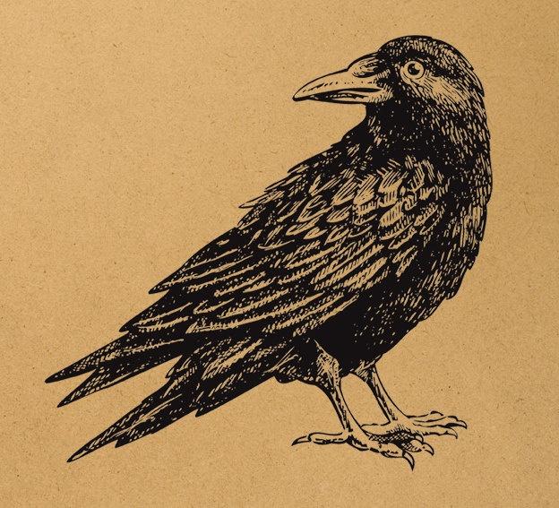 Fools Crow Critical Essays