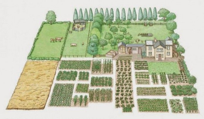 This is the Only Blueprint You Need for a Successful 1 Acre Homestead - Freedom Prepper
