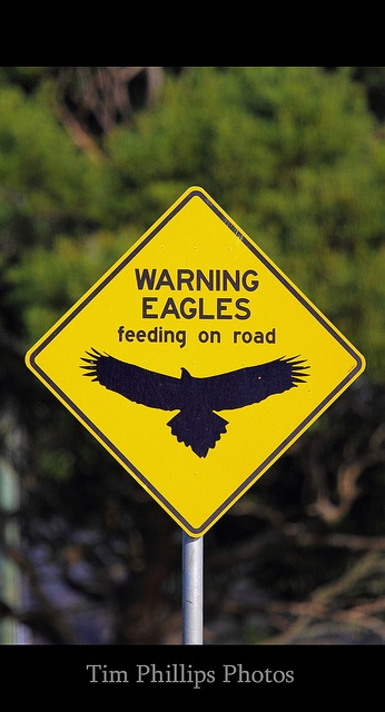 A sign in Australia for the Wedge Tailed Eagle.