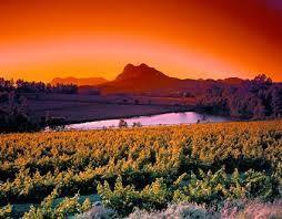 Resultado de imagem para vinhos da africa do sul