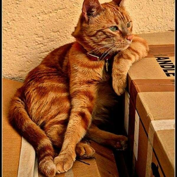 25 b sta carton de d m nagement id erna p pinterest cartons de d m nagement carton pour - Ou trouver carton demenagement ...