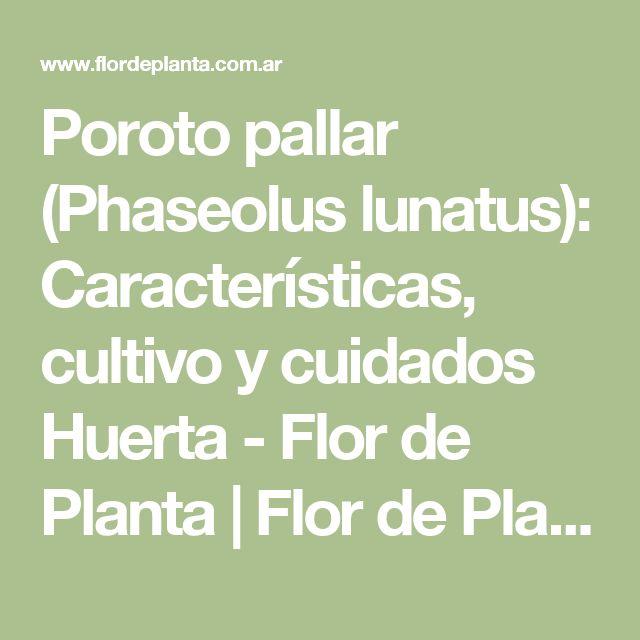 Poroto pallar (Phaseolus lunatus): Características, cultivo y cuidados Huerta - Flor de Planta | Flor de Planta