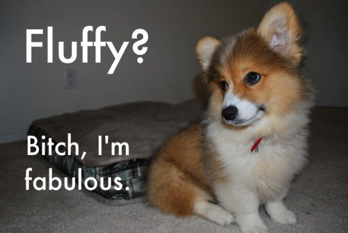 my favorite dog growing up was a Corgi named Nicky. We called him 'wiggle butt' because that's how they wag :D