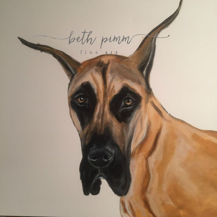 24x30 inch canvas.  What a face!  Contact me for commissions at www.bethpimmfineart.com