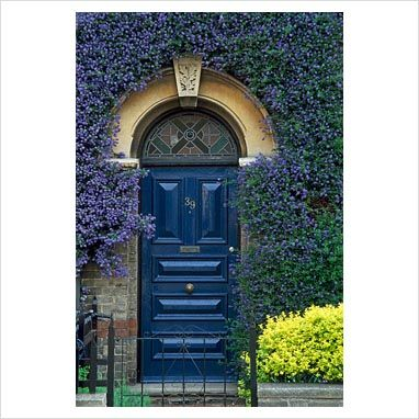 GAP Photos - Garden & Plant Picture Library - Ceanothus trained around blue victorian front door - GAP Photos - Specialising in horticultural photography