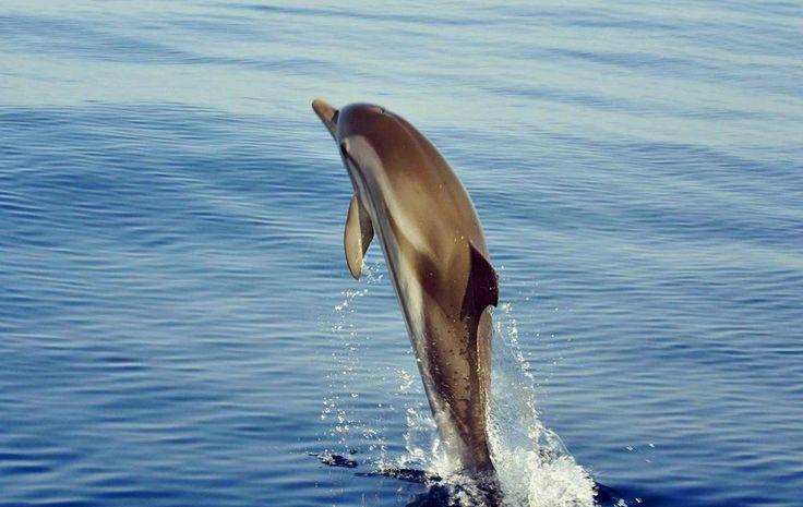 where dolphins meet eternal #greek summer