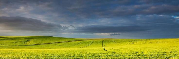 Break in the Storm Bredasdorp Area, Overberg Bright afternoon sunlight illuminates the wheat fields below a dark winter sk