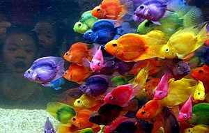 Color Fishes
