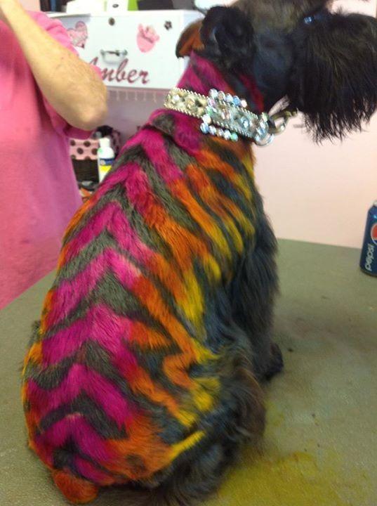 ☀opawz.com   Supply Pet hair dye,hair chalk shampoo perfume.......professional pet grooming products.