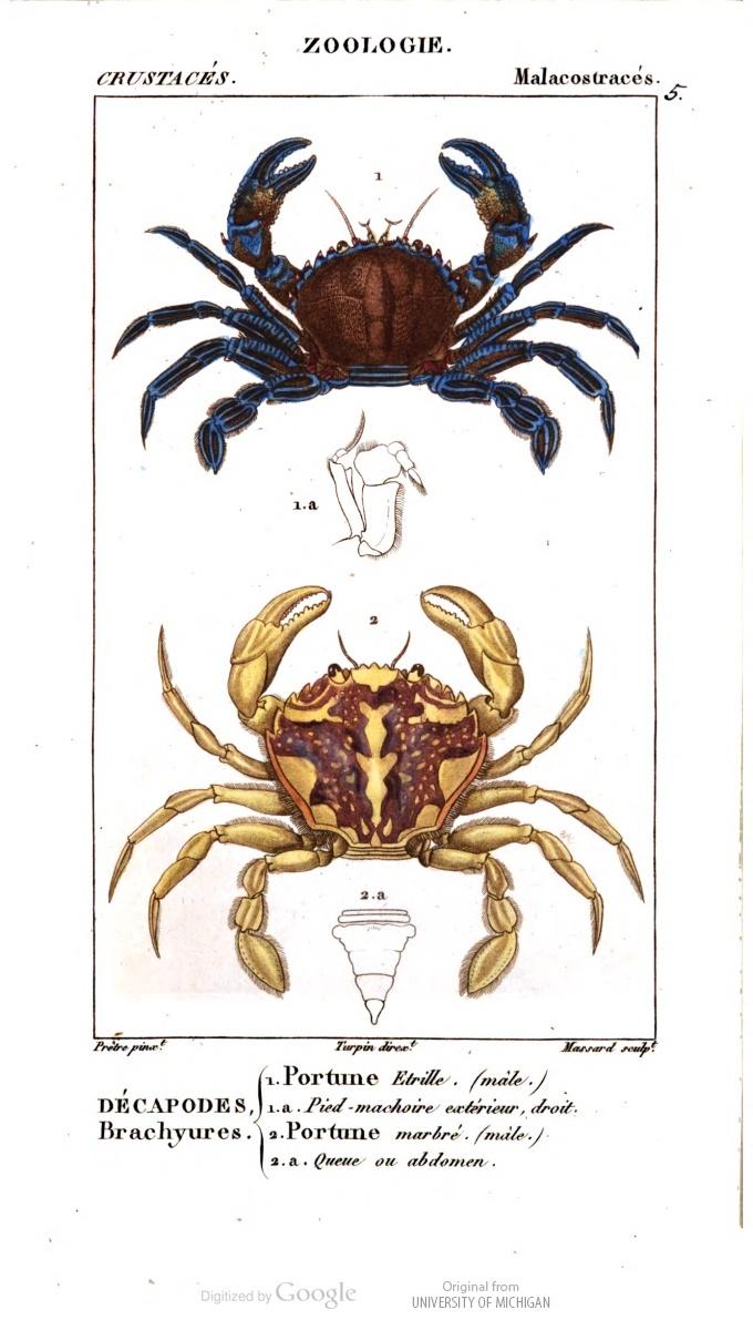 Crustaceans! Dictionnaire des sciences naturelles, Atlas Vol. 3. #carcinology