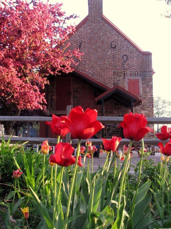 Photo In OSH Garden May 4, 2013