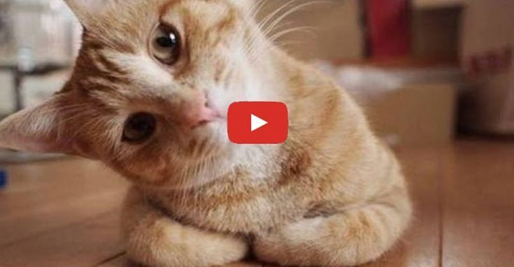 Cute Cats Getting Confused Cute Cats Cute Cats Kittens Funny