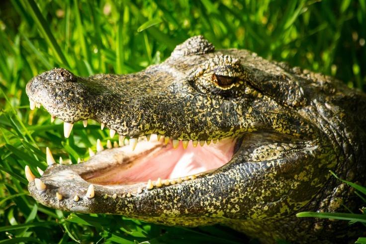 Lizards Are In Myrtle Beach South Carolina