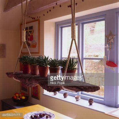 Stock Photo : Cactus plants on a shelf hung by ropes from the ceiling, beside a window
