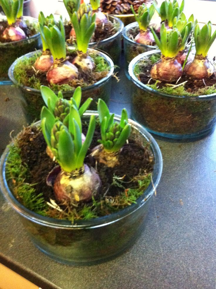 Sammenplanting med svibler og mose