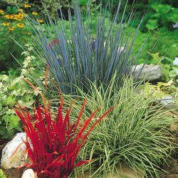 1000 images about ornamental grasses on pinterest for Short ornamental grasses full sun