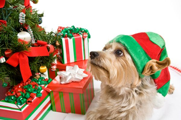 12 Tips for dog-friendly holidays