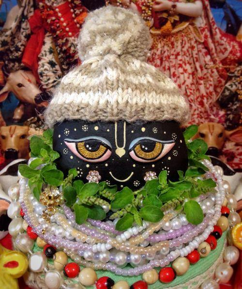 instakrishna:  Sri Govinda Dev  04.01.2016 #govinda #shaligram #darshan #tulasi…