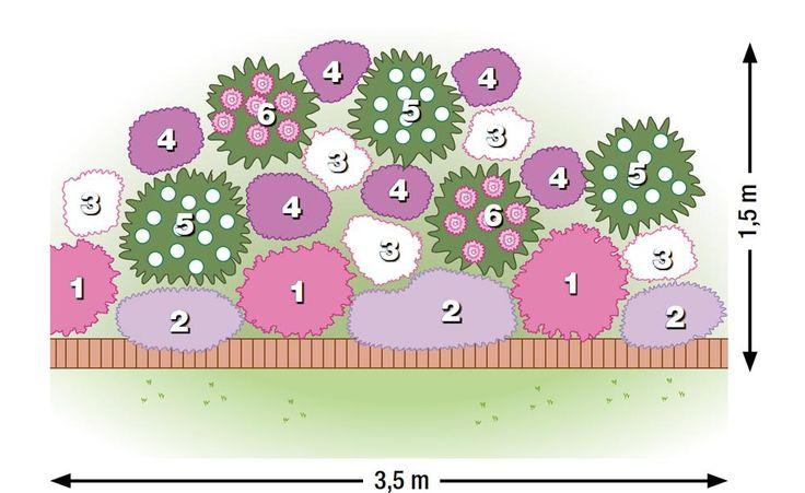 Zum nachpflanzen dahlien in eleganter begleitung dahlie for Ideen beetgestaltung