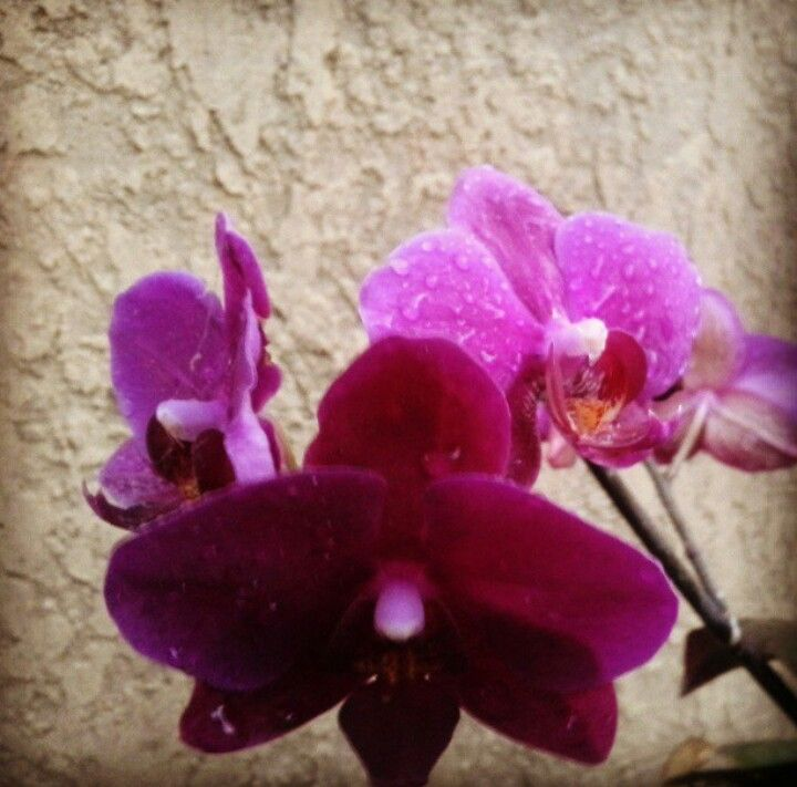 My orchids in 2013 :)