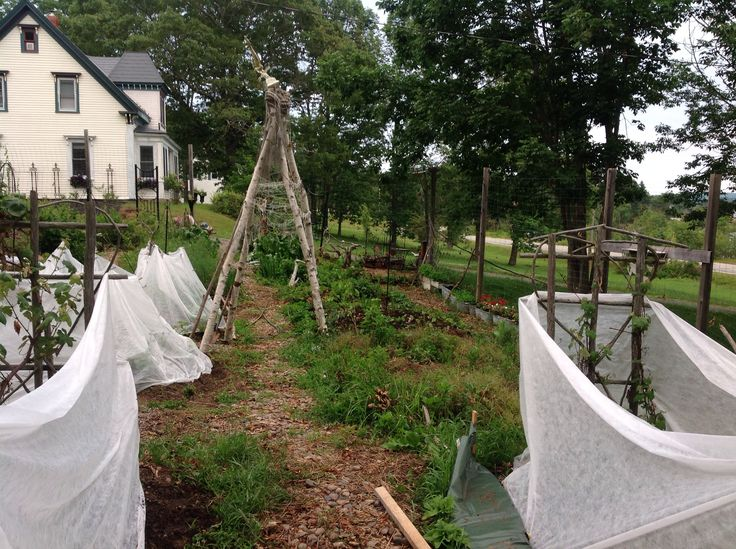Looking up the garden - summer 2014.  Beds are tented to keep out the raccoons.
