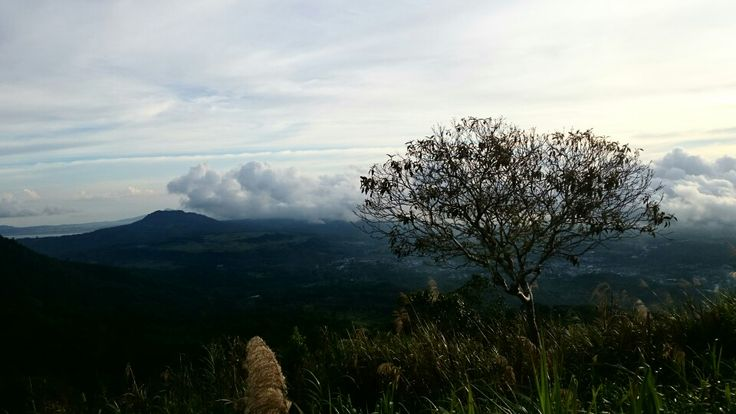 love this so much...top of mahawu mountain.... tree as a point off view...... tomohon.. north sulawesi indonesia #damniloveindonesia